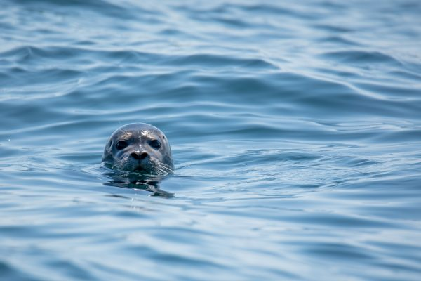 whats on seal pup st davids escapes