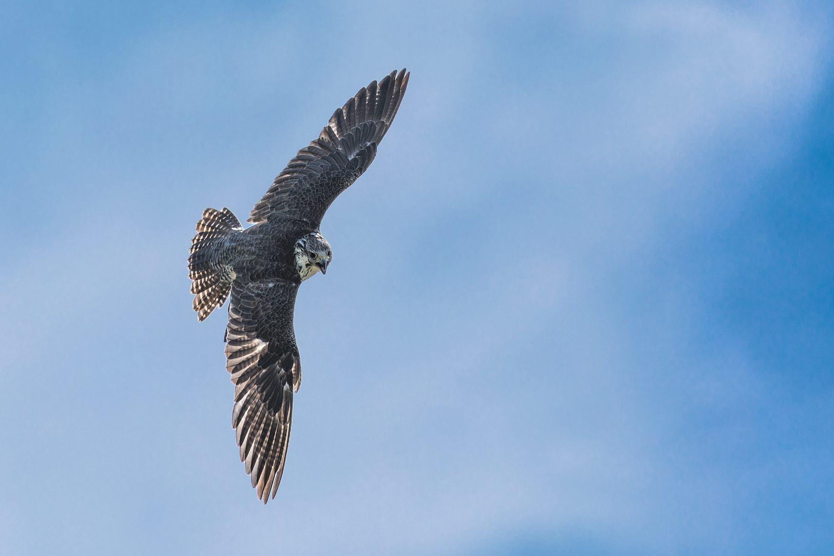Ramsey Island - bird