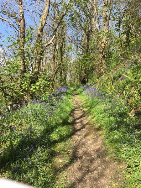 The Bluebell Woods, Solva -St Davids Peninsula